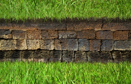 grass on old brick wall  Stock Photo