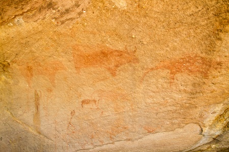 animal painting on the wall cave