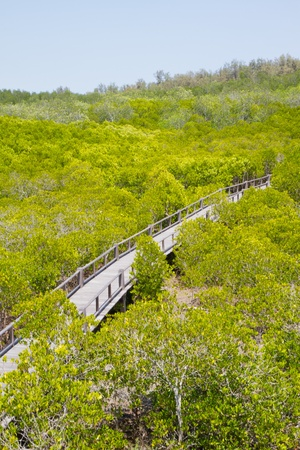 bridge to mangrove forest photo