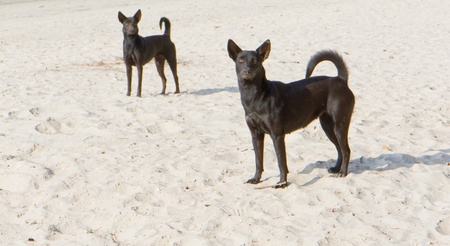 two black dogs on the beach