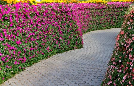 stone path in flower garden photo