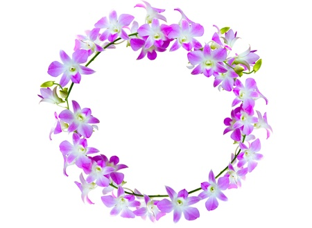 violet orchid flowers lined in frame on white background  photo