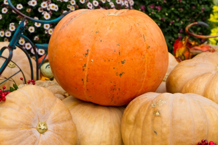 earth nut: pumpkins