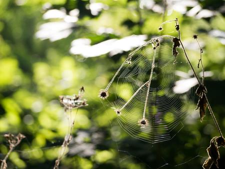 spiderweb: Spiderweb