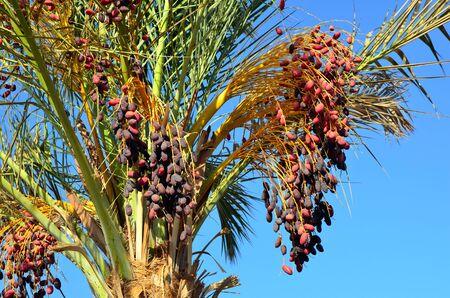 dates to marsa alam egypt