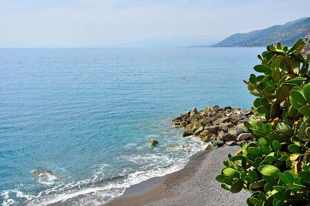succulent plants in Camogli Liguria Italy