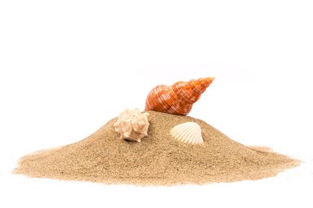 Geïsoleerde zeeschelp op zand witte achtergrond