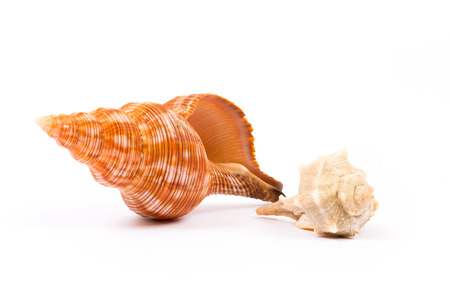 Isolated seashell on white background Stock Photo