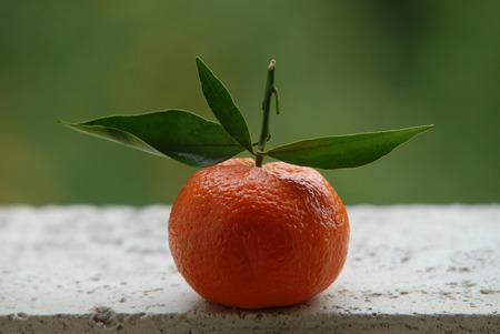 tangerine: tangerine garden outdoor