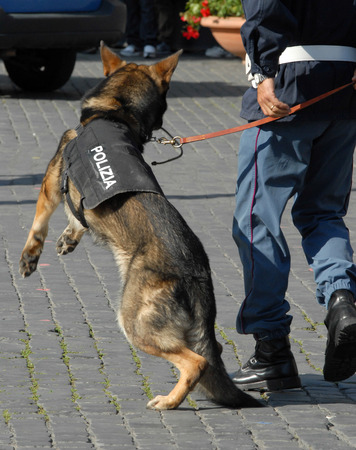 sniffer: Italian police dog with the instructor Stock Photo