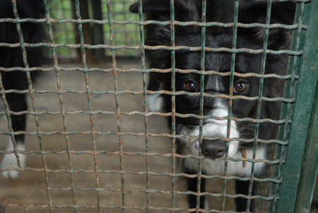 doghouse: Dog in cage. Doghouse