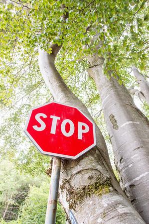 deforestacion: Pare la muestra en el bosque. Sin la deforestación Foto de archivo