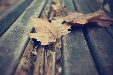 dode bladeren: Dead leaves on bench
