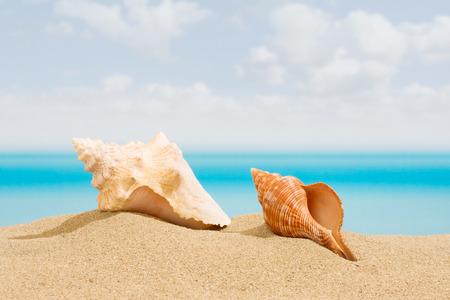 seashell: Seashell on the beach, with a tropical sea