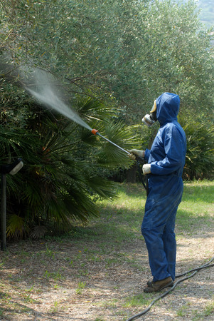 disinfectant: Worker sprays disinfectant on olive trees Stock Photo