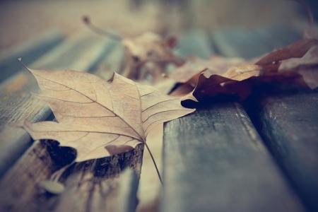 dode bladeren: Dode bladeren op de bank Stockfoto