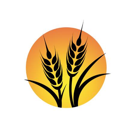 Vector sun and wheat