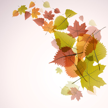 dead leaves: Vector dead leaves, autumn background Illustration
