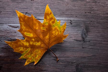 dode bladeren: Dode bladeren op houten bank