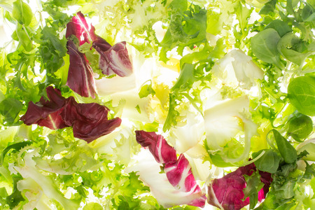 backlight: fresh lettuce in backlight. salad fly on white background Stock Photo