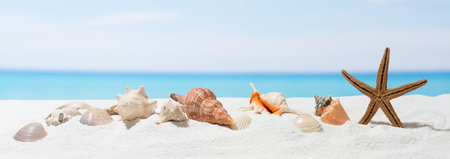 Banner summer background with white sand. Seashell and starfish on the beach. Stock Photo