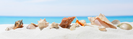 Banner summer background with white sand. Seashell on the beach. Stock Photo