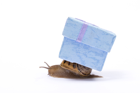 Slow shopping concept. Snail carry a gift with copy space