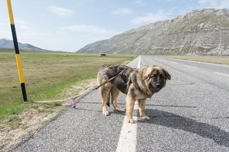 夏休みに出るときに犬を捨てないでください。山の道路上の混合品種