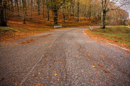 Foliage in Monti Simbruini national park, Lazio, Italy. A road through the woods. Autumn colors in a beechwood. Beechs with yellow leaves.