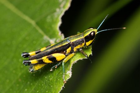 Macro of a colorful grasshopper sitting on leaf. photo