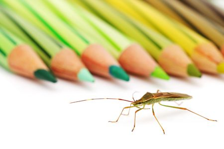 shield bug: A shield bug is crawling beside green color pencil.