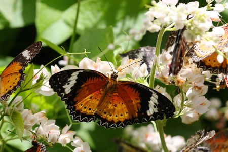 legs spread: Close up of butterflies on flower over grean leaf.