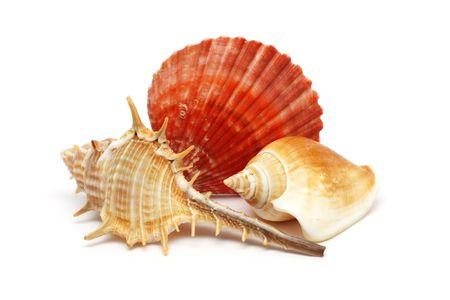 Three seashells put together isolated over white background. Stock Photo