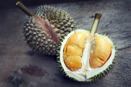 tropical food: Close up of durian with orange yellowish flesh. Stock Photo