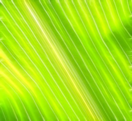 leaves foliage irises light background design summer texture Stock Photo