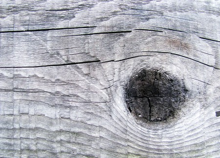 Tree structure close up board grunge vintage