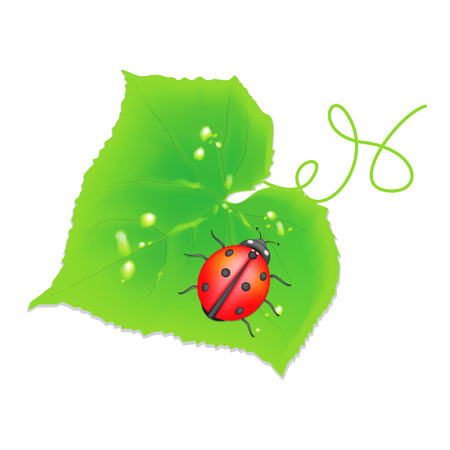 Cucumber sheet with the ladybird  illustration