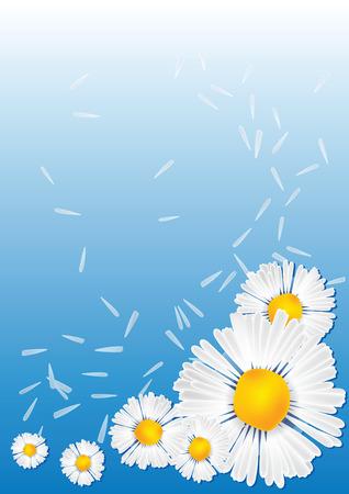chamomile Background  illustration flower close up flora Illustration