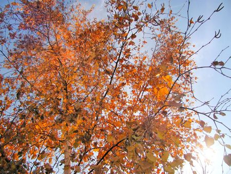 Branches of a tree in the autumn Stock Photo