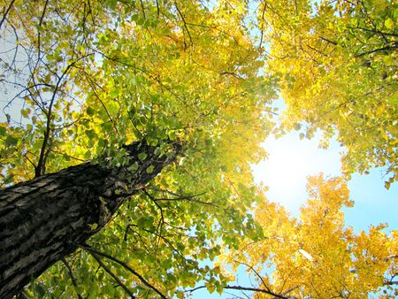 view from below: autumn foliage view from below tree leaf nature forest