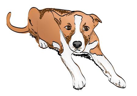 puppy dog freehand  Illustration