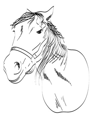 head of a horse freehand