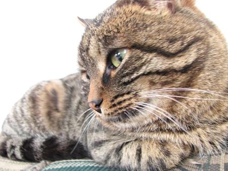 cat close-up portrait of a cat