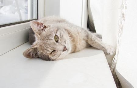 cat lying on a windowsill