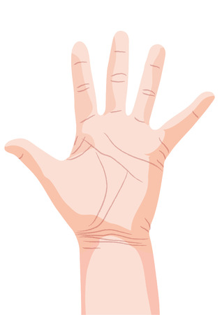 palm reading: hand, palm  Illustration
