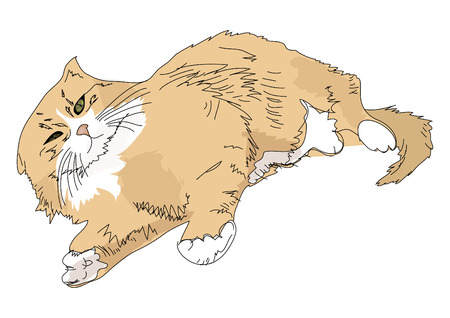 longhaired: long-haired cat Illustration