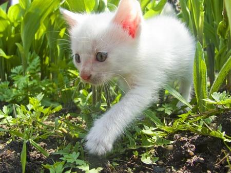 white fluffy kitten in the grass photo