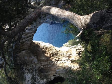 Capri the elephant