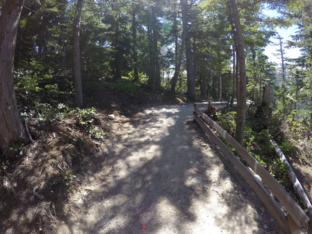 Take this mountain top trail in the forests of the pacific northwest on this perfect summer day.  There is nothing but people and trees for miles. 写真素材