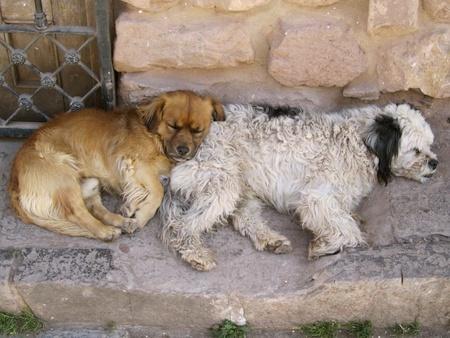 Stray Dogs Keeping Warm in Cusco, Peru